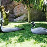 Зоопарк Фуэнхиролы