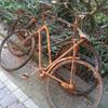 Ржавые велосипеды, зимовавшие в канале