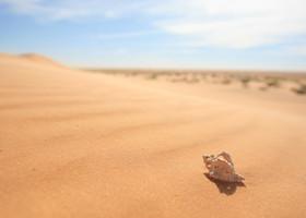Мавританские развлечения