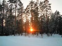 Крещенский лес на Псковщине