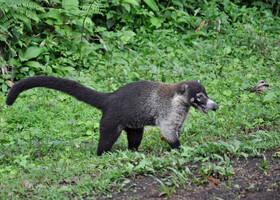 Многоликая Коста-Рика