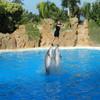 Дельфины здесь умеют многое