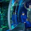 Водоворот -так назвали архитекторы студии 3XN cвое победное предложение o разработке нового океанариума
