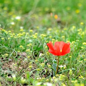 Весна 13-го...март.