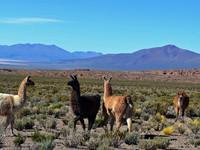 По боливийскому высокогорью 2