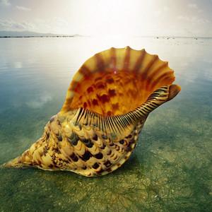 Шарм-Эль-Шейх и подводный мир Красного моря