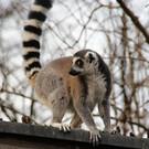 Зоопарк Хельбрунна
