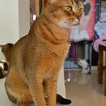кафе кошек (1).JPG