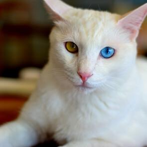 кафе кошек (12).JPG