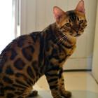 кафе кошек (4).JPG