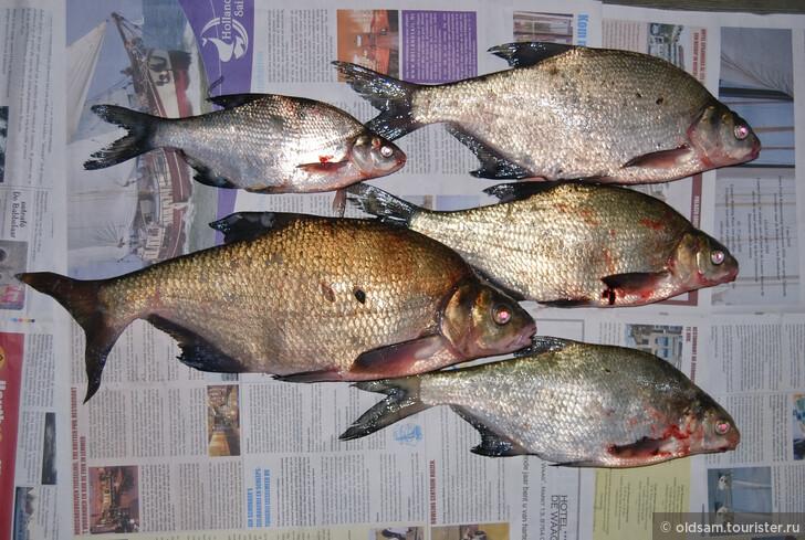 Разрешение на рыбалку в Голландии
