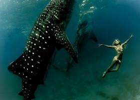 Красота мира: плавание с добрыми гигантами