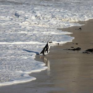 Круиз Симфония. Часть 3. Пингвины