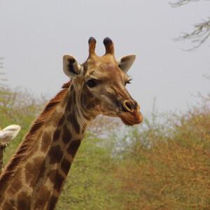 Круиз Симфония.Ч.8.Национальный парк Сенегала