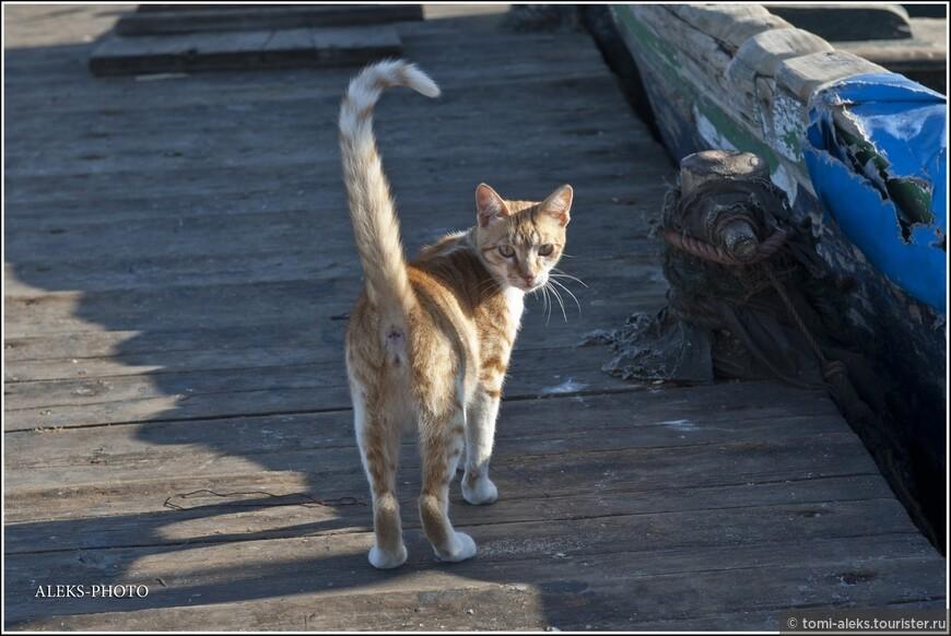 Кошки в Марокко всюду. Порт - не исключение...
