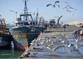 3. Как продают рыбу в Агадире (Марокко)
