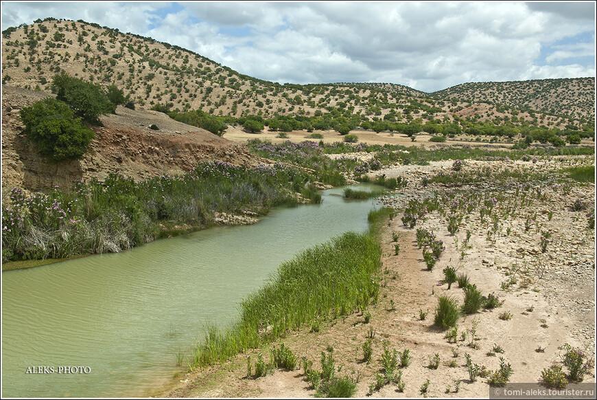 Небольшие высохшие русла рек, вдоль которых радуют глаз майские  цветы.