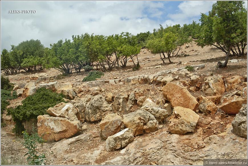 Типичный ландшафт предгорий. Рыжие камни и деревья, по которым, кстати, любят лазить местные козы.