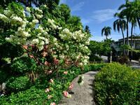 Rose garden или где розы в этом кантри-клаб?