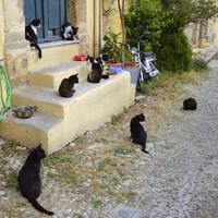 Коты родосские