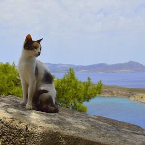 Кот на фоне Линдосской бухты