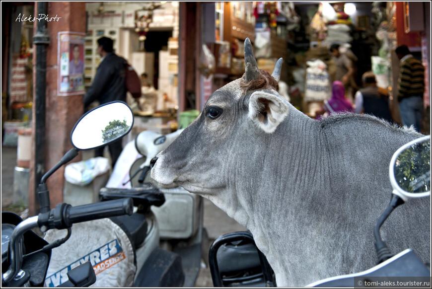 Вечерний Джайпур (1).jpg