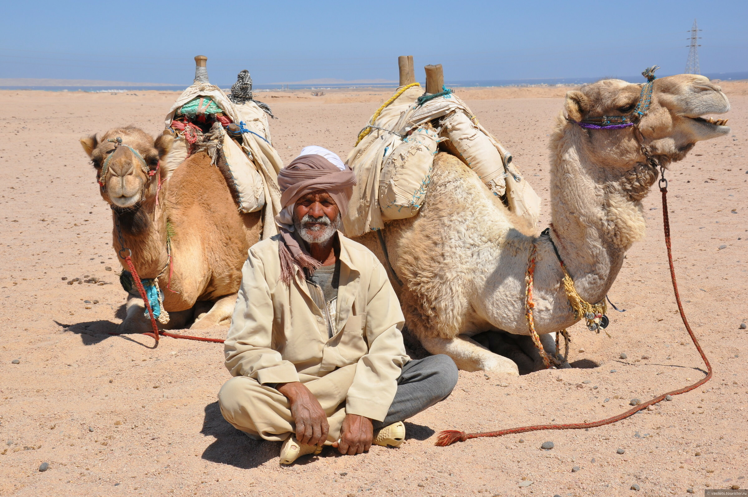 постер пустыня и верблюды и люди приготовленным десертом ставим