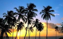 Прямой рейс на Ямайку продлен до весны 2014 года