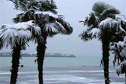 В Бразилии впервые за 20 лет выпал снег, есть жертвы