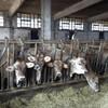 Агротур на итальянскую ферму
