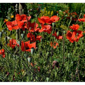 Цветущий сад Клода Моне.