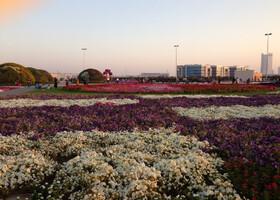 Miracle Garden — парк цветов