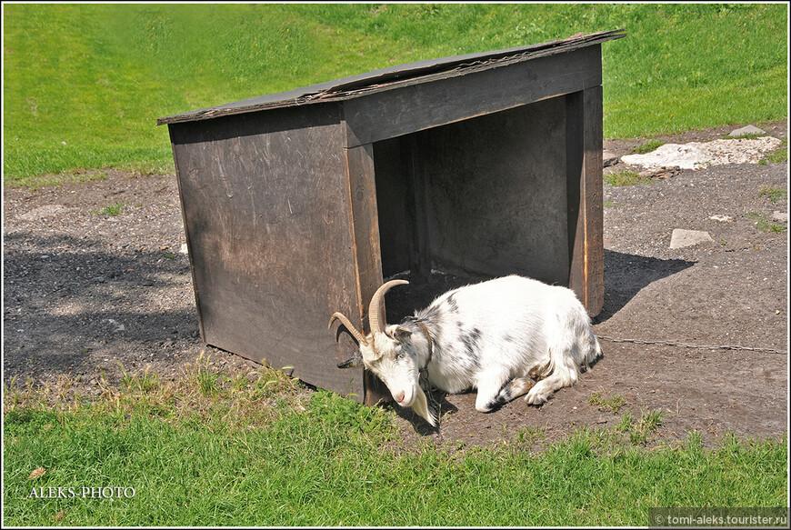 Еще раз - козел-охранник - притулился у своей конуры...