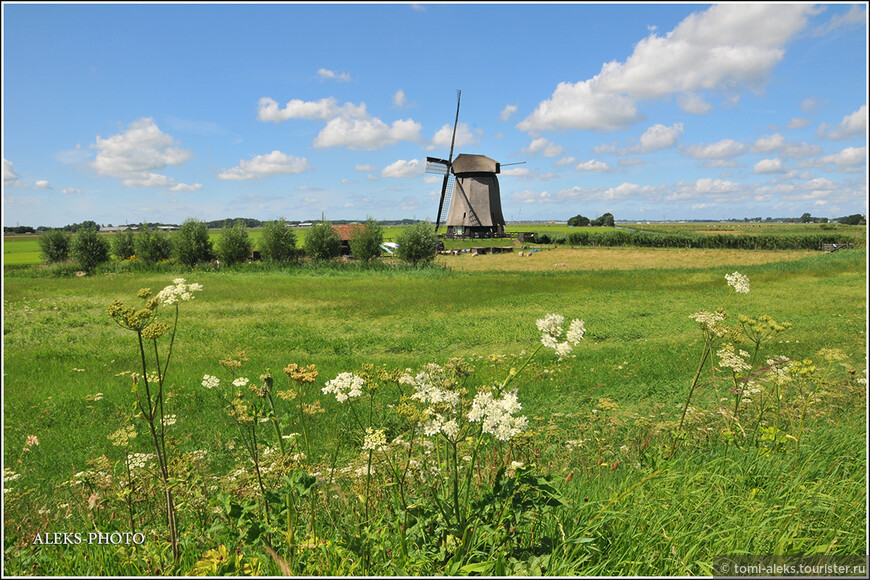 Большого разнообразия цветов на здешних лугах мы не увидели. Хотя Голландия считается одной из лидирующих по цветоводству стран...