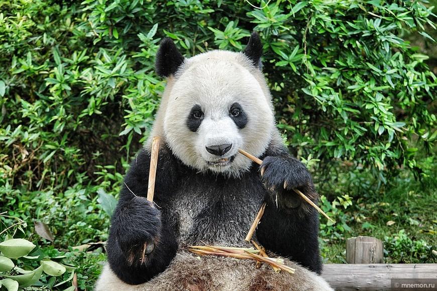 Кунг-фу панда!