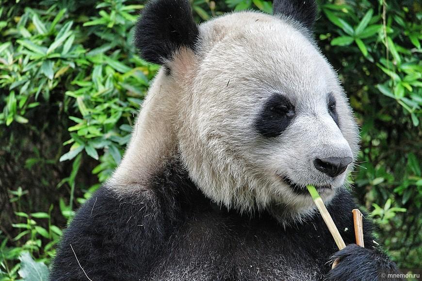 Курю бамбук