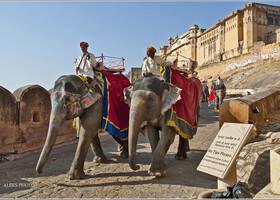 Как попасть в Рай на слонах (Индия)