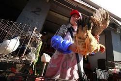 В Камбодже вспышка птичьего гриппа
