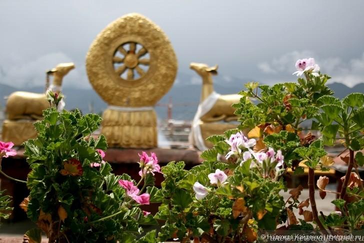 Тибет: помощь больным аутизмом, душевными отклонениями и задержкой в развитии