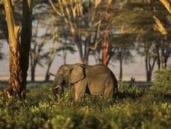 В Танзании американского туриста растоптал слон