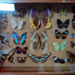 Белиз сити: коллекция бабочек