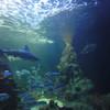 Обитатели океана добрые и не очень...