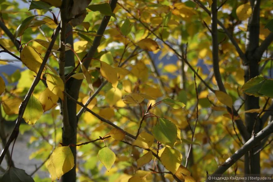 и в Лхасу пришла осень!
