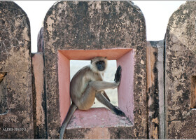 Среди пушек и обезьян (Индия)