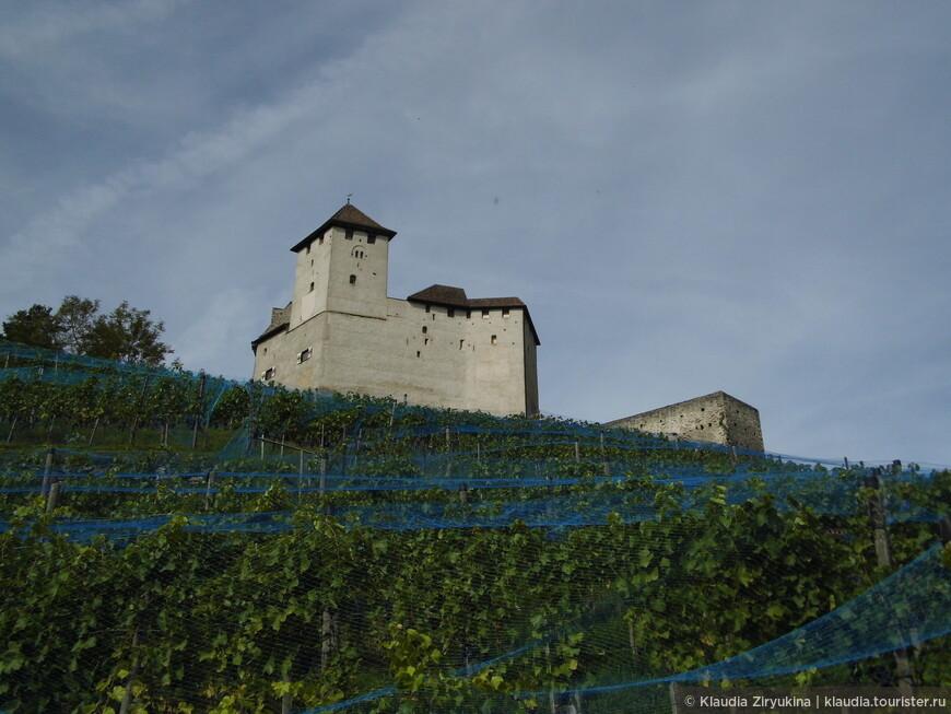 Вокруг замка -- сплошные виноградники.