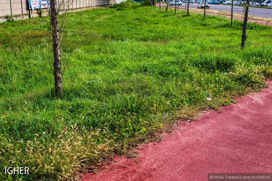 до весны газоны уже стричь не будут...