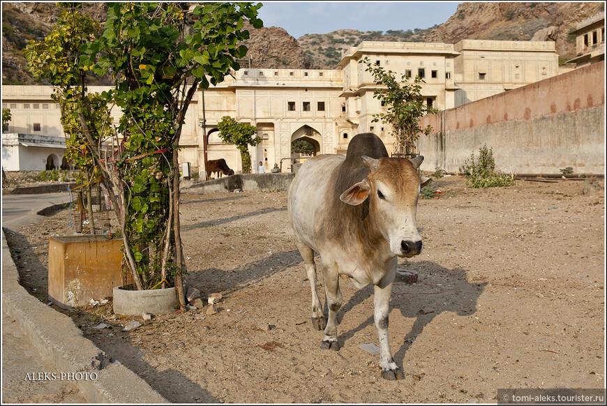 Цвет многих коров гармонировал с цветом монастырских строений...