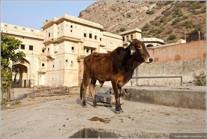 Так интересно стояли многие животные, как памятники на фоне зданий монастыря. Торопиться им было некуда...