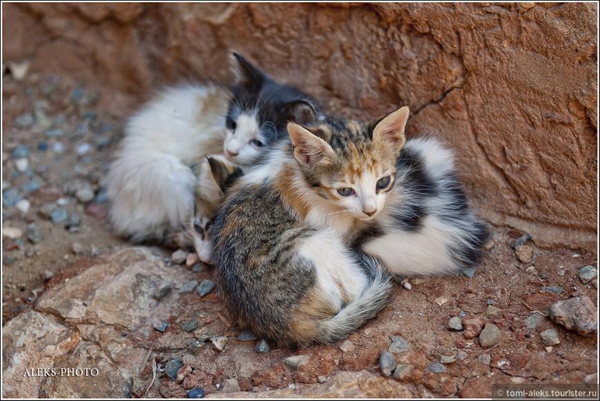 Рядом с мастерскими много кошек...