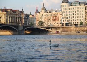 Весна. Прага. Лебеди